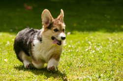 Small Of Quiet Dog Breeds