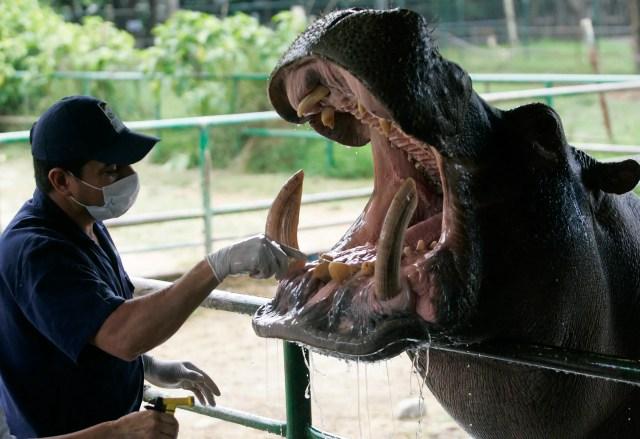 Pablo Escobar Colombia hippos Medellin
