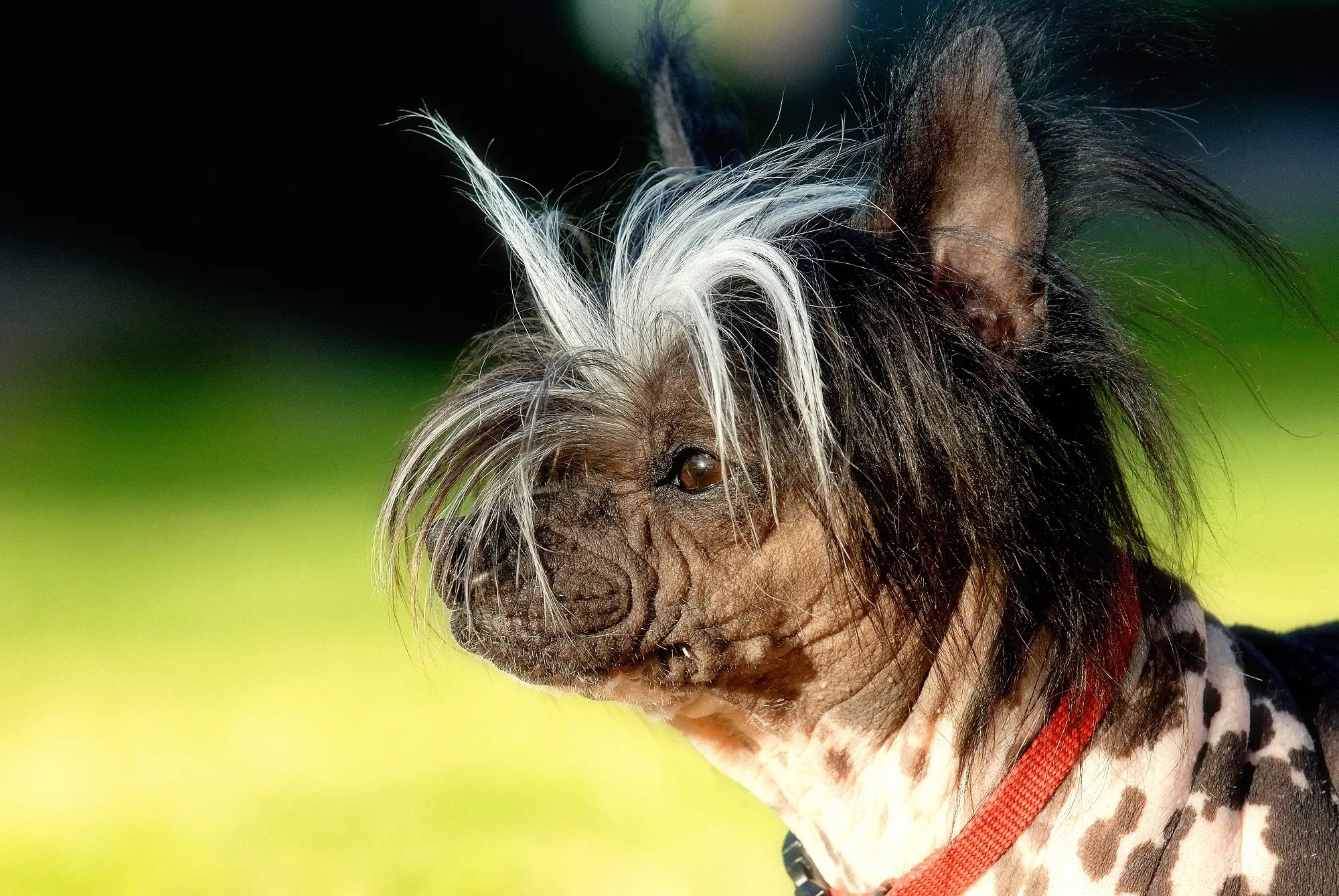 Cozy Of Ugliest Dog Breeds Richest Ugly Dog Breeds Ugly Hunting Dog Breeds bark post Ugly Dog Breeds