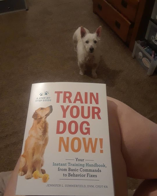 Train Your Dog Now! by Jennifer L. Summerfield DVM CPDT-KA