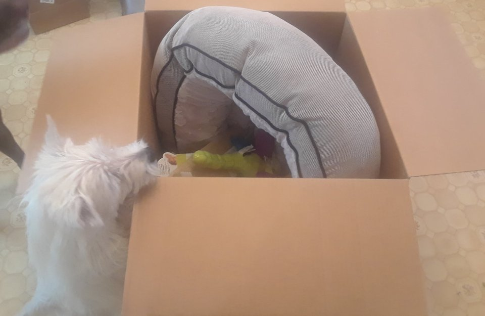 My Pets Received a HUGE Package from Worldwise Pet Brands!!
