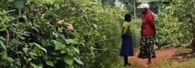 Sugar Cane, Cuddles, and Family Ministries in Karogoto