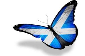 saltire butterfly