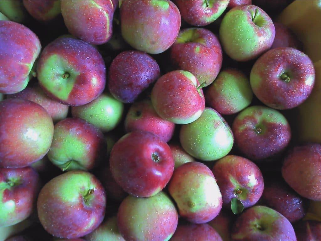 applesmcintosh (1)