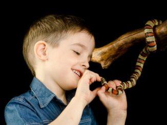 little boy and milk snake