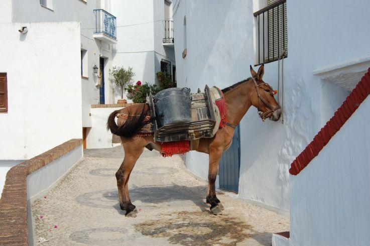 Muldyrene er god arbejdskraft, når bilerne ikke kan komme helt op til husene øverst i den gamle bydel.
