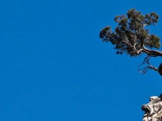 Lonely-Tree.jpg