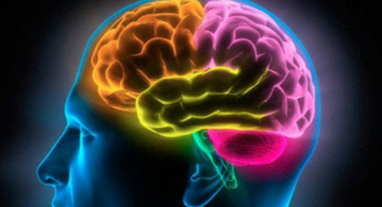 Changes to the brain region that controls emotional behaviour and cognitive function were more extensive than those caused by early life stress.
