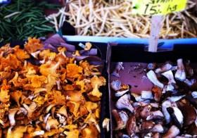 В Стокгольме открыт грибной сезон!