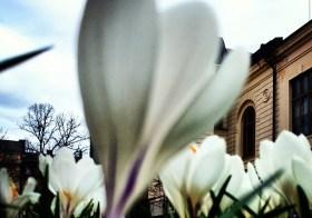 Весна продолжается