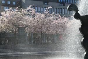 фонтан и цветущая сакура в стокгольме