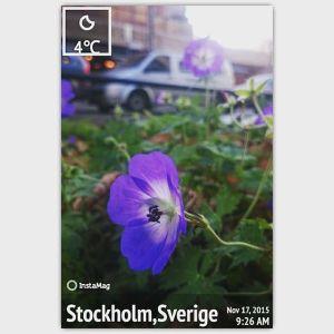 погода в Стокгольме в ноябре цветут цветы