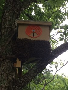 Swarm trap day 3