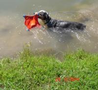 guffswims.JPG