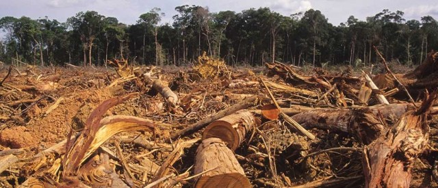 Amazon-Rainforest-Deforestation-1024x440