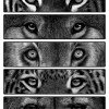 Tiger Wolf Lion Jaguar Cheetah Eyes Pencil Drawing Print
