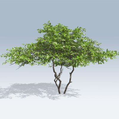 Lemon Tree (v6) - SpeedTree