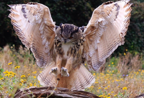 A seriously majestic owl