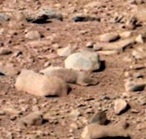 squirrel-on-mars-closeup