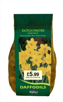 Taylors Bulbs DC61 Dutch Master Daffodils available from Strawberry Garden Centre, Uttoxeter