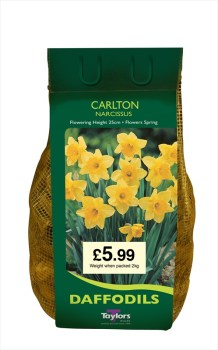 Taylors Bulbs DC64 Carlton Daffodils available from Strawberry Garden Centre, Uttoxeter
