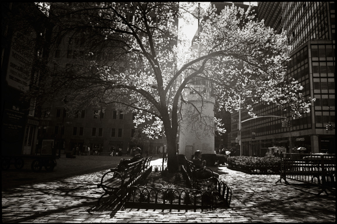 Spring NYC  by Strazza