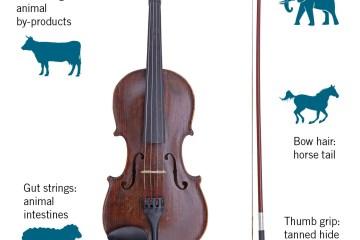 Fiddle-YI-Vegan_234