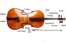 Cello-Parts_large[1]