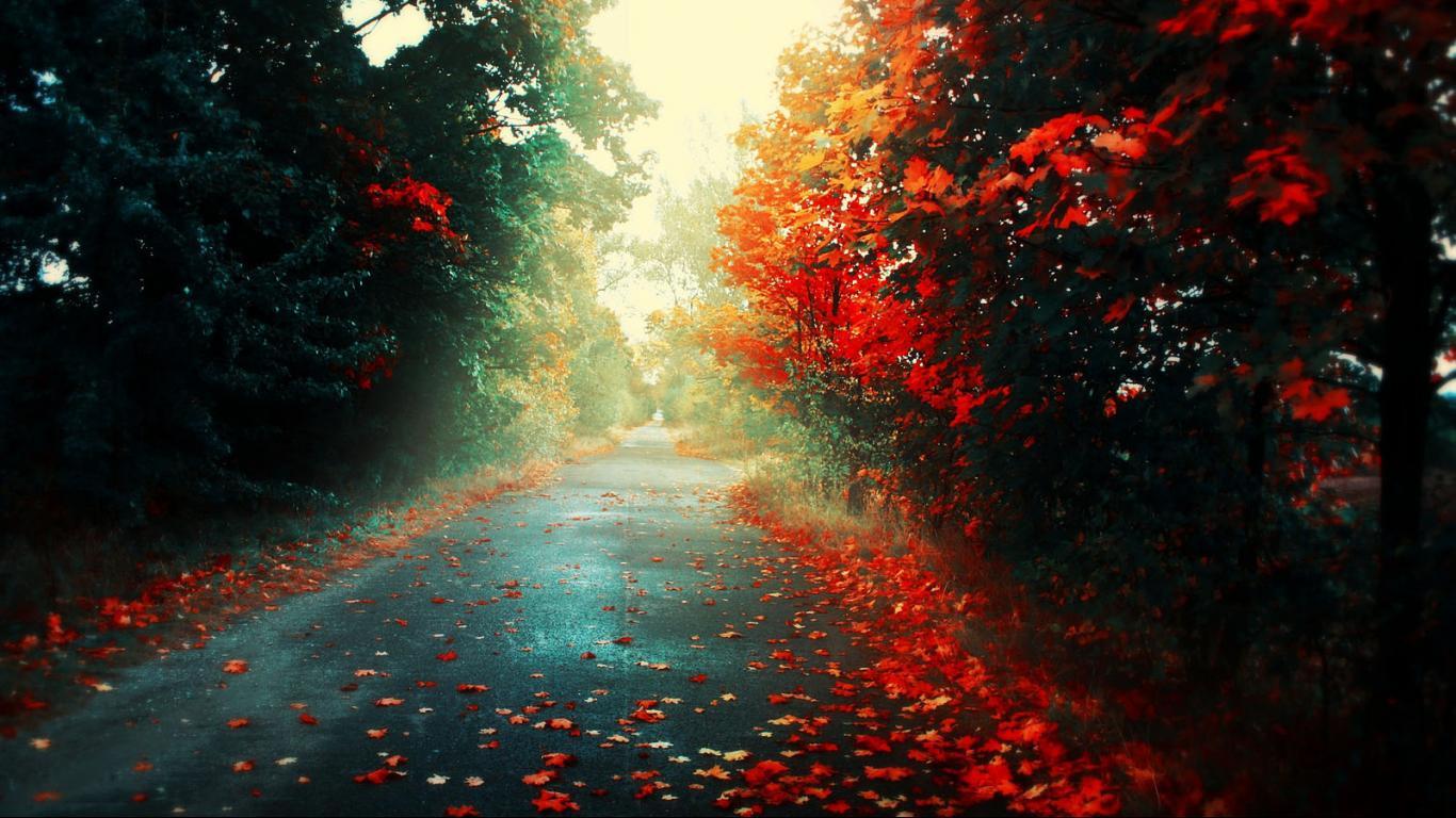 Fall-wallpaper-1366x768-HD-wallpaper