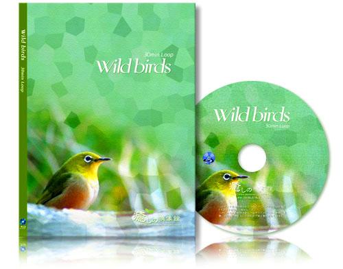 wild_virds_bd