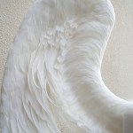 wing063-up2