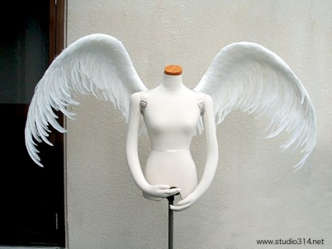 wing069-f