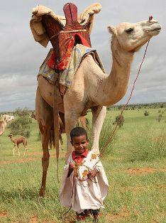 camel-piss-shower