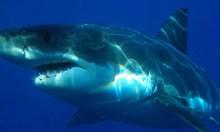 Trending now: sharks.