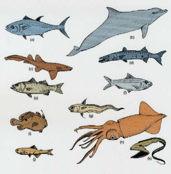 Example of organisms that form nektons.