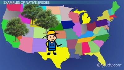 Native Species: Definition & Examples - Video & Lesson Transcript | Study.com