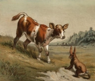 How does a cow catch a hare?