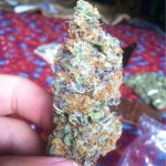 this blue cheese marijuana reeks