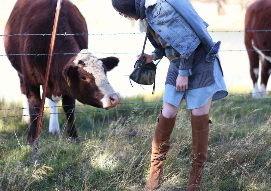 Hungry Cow 11b