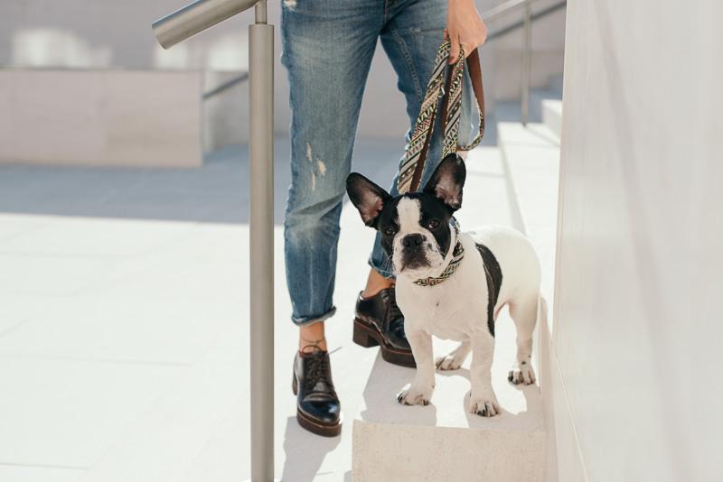 brott-barcelona-charlie-the-dog-french-bulldog-styleinlima-BROTT-FW2015-AmerM