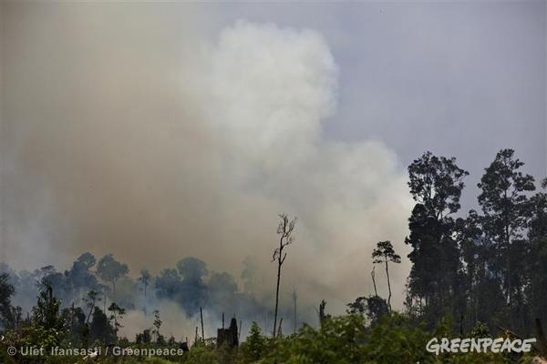 WWF: Kabut Asap Tak Kunjung Reda, Perlu Penanganan Lebih Intens