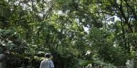 WWF: Lebih 80 Persen Deforestasi Terkonsentrasi pada 11 Wilayah di Dunia