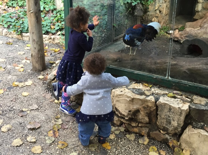 Grace squawking at the birds at the Jerusalem Biblical Zoo