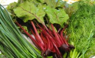 chives-baby-red-beets-dill-weed2