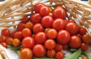 Free Cherry Tomatoes