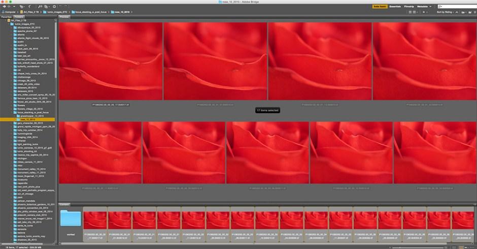 rose capture photos