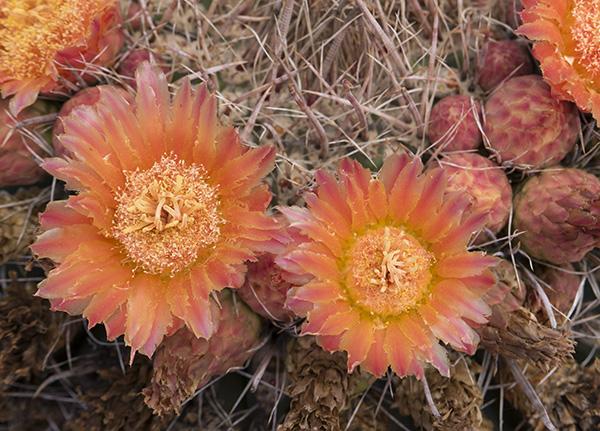 scrim light on cactus