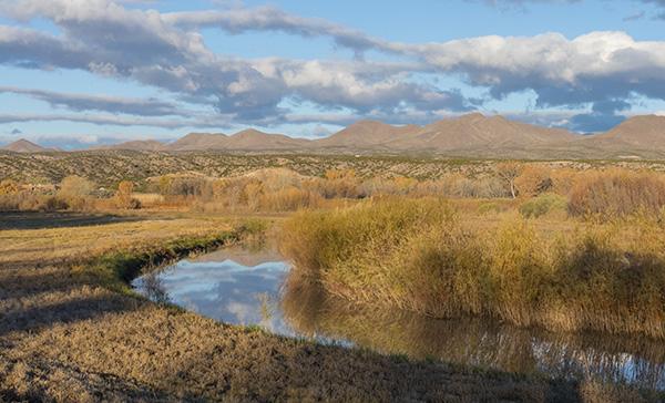 bosque del apache landscape photo