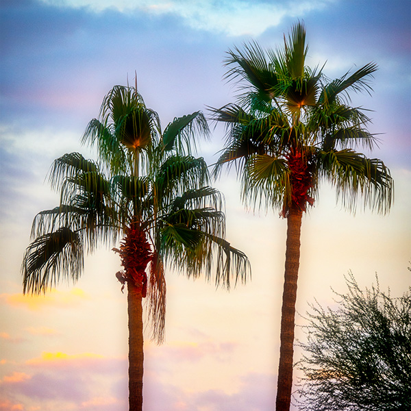 palm tree sunset bob coates photography