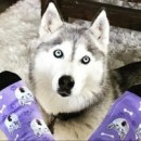 Cusom Pet Socks is a unique online store